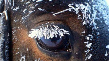 10 Tips per l'inverno (parte 2)