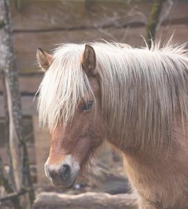 articoli pony