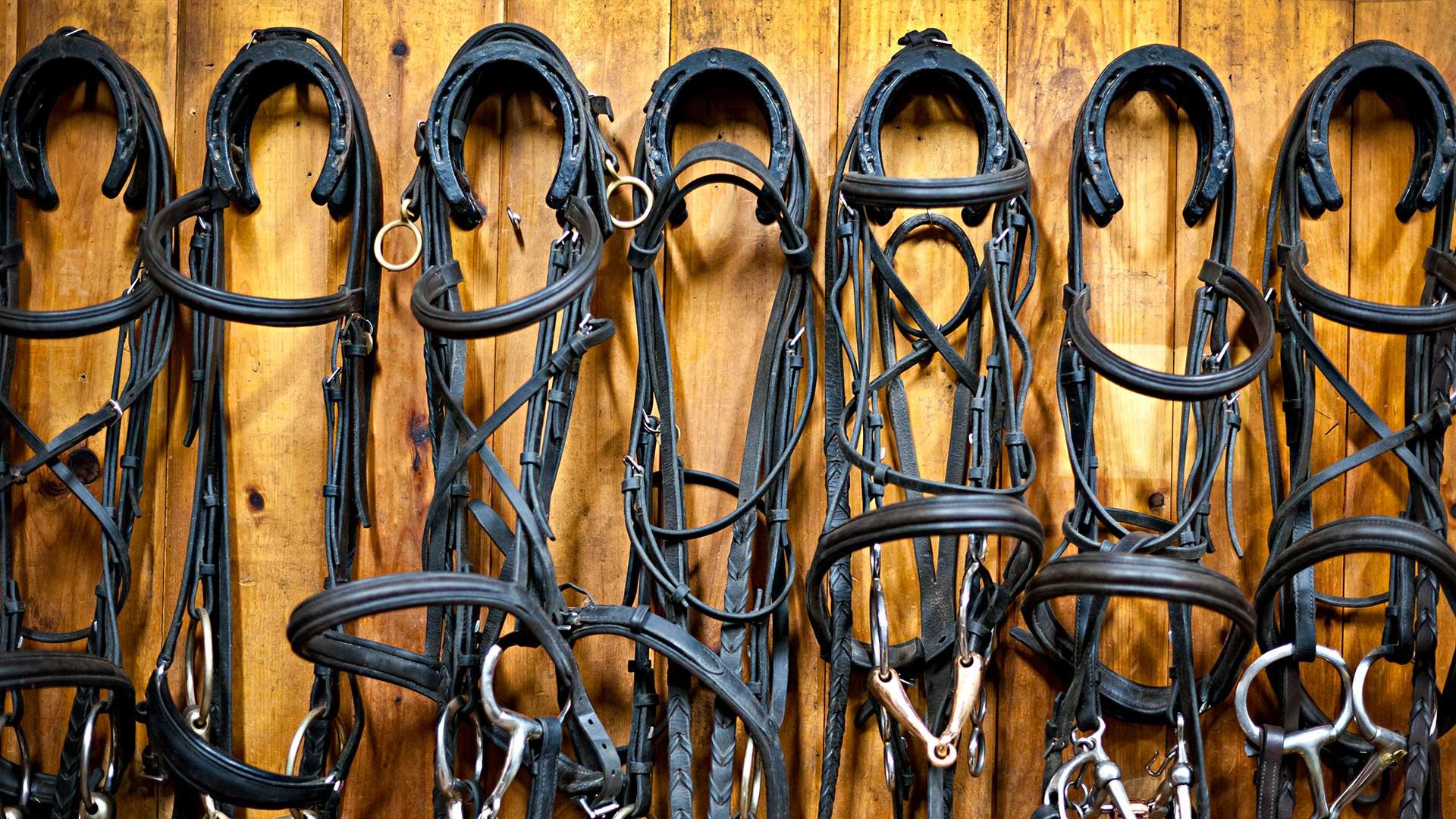 Guida alla pulizia e cura dei finimenti per cavalli – Parte 1