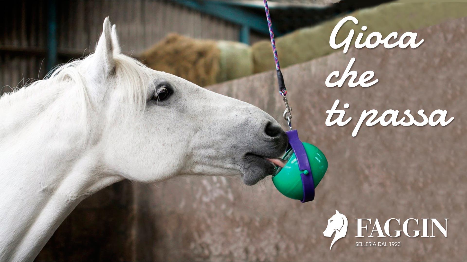 Gioca che ti passa: consigli su come evitare lo stress dei cavalli in questo periodo di inattività