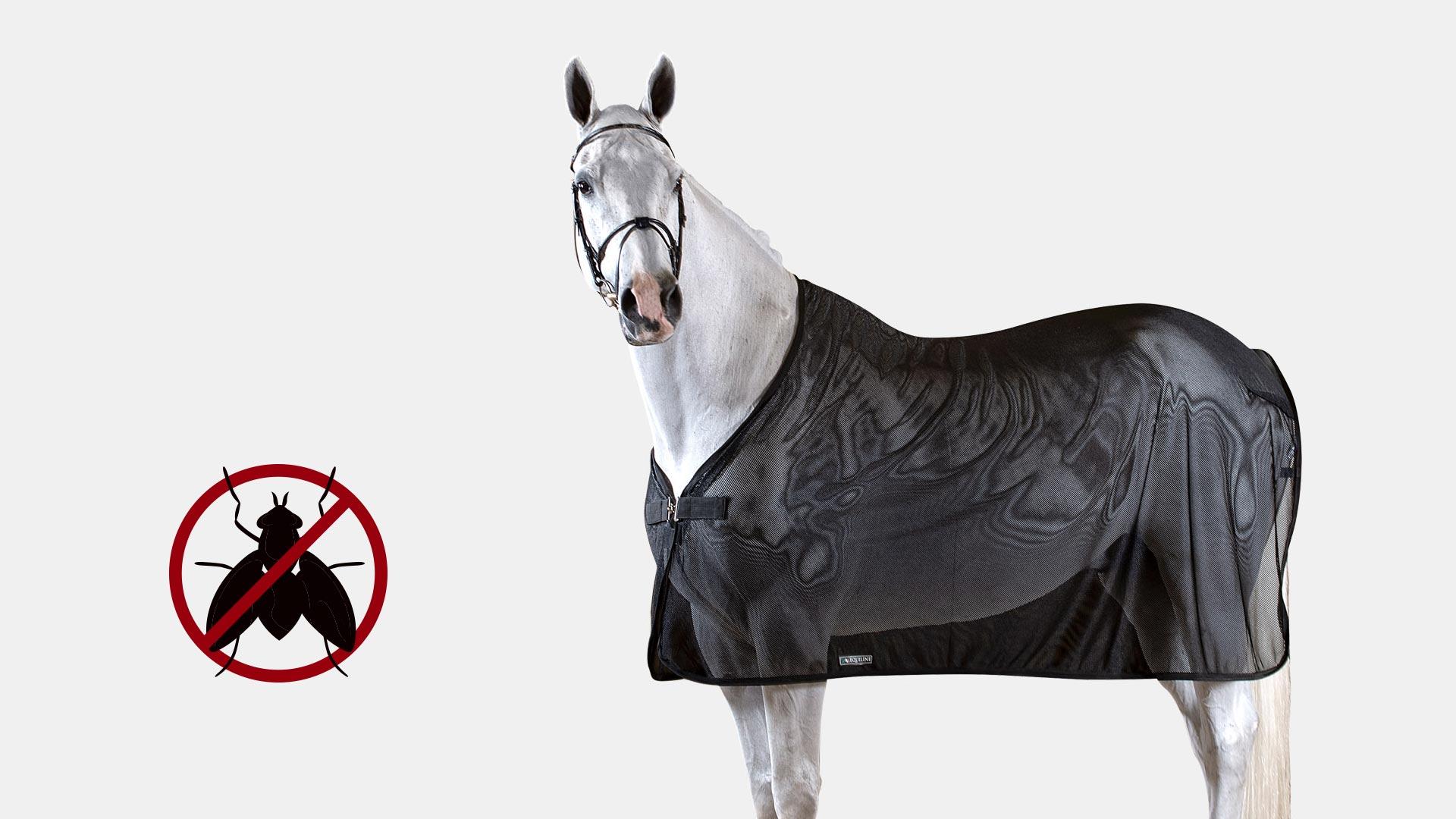 Come proteggere i cavalli dalle mosche