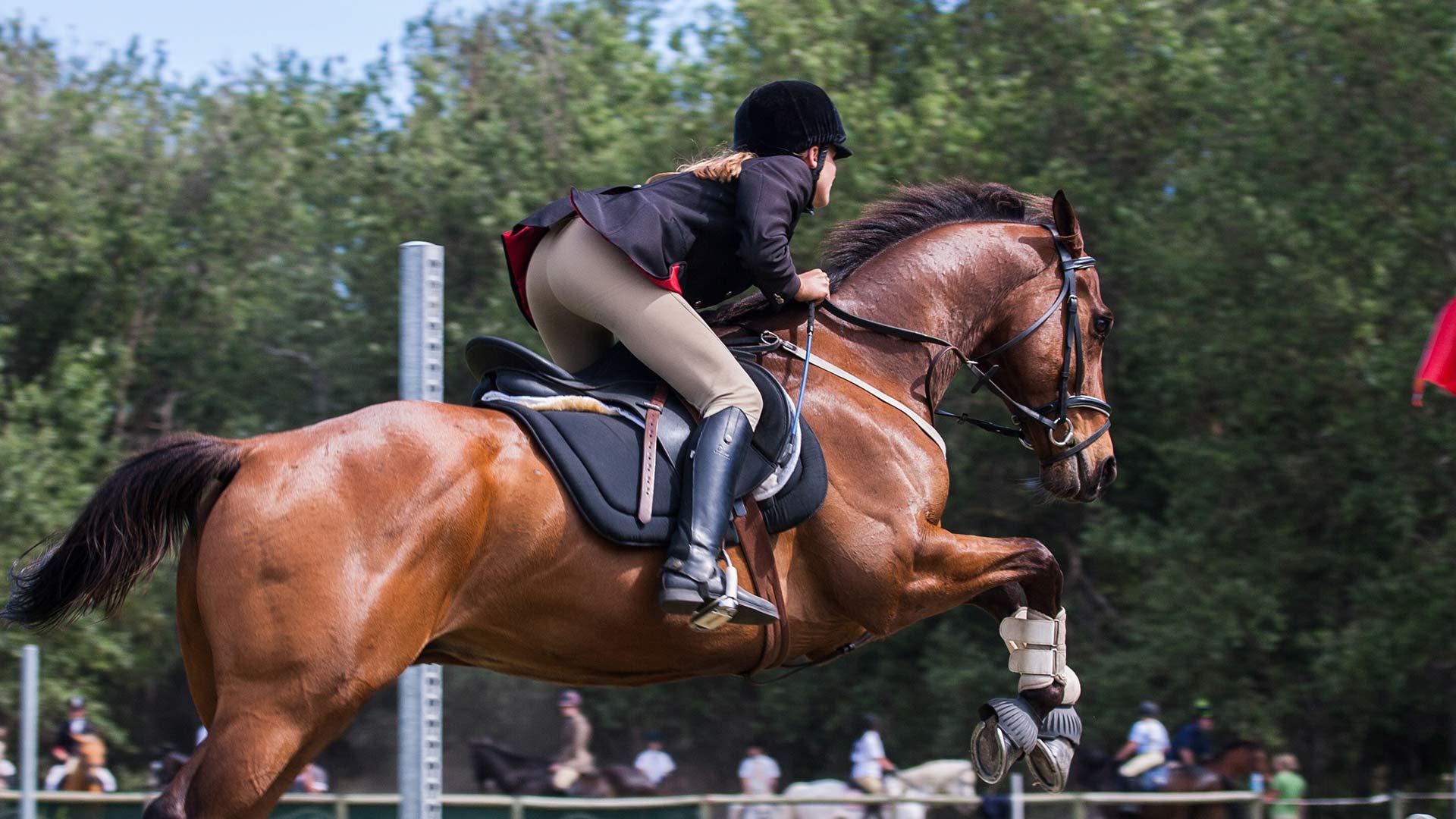 Comfort a cavallo: il copriseggio per sella inglese