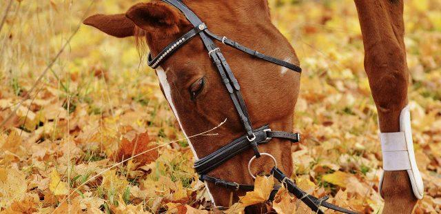 Come scegliere la capezza per il tuo cavallo