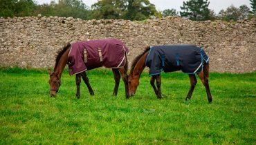 Le coperte per cavalli da usare in primavera